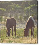 Assateague Island Wild Ponies Canvas Print