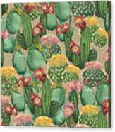 Assorted Blooming Cactus Plants Canvas Print