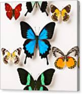 Assorted Butterflies Canvas Print