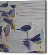 Assorted Gulls Canvas Print