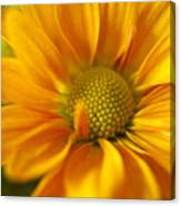 Aster Close Up Canvas Print