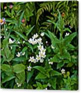 Asters And Fringed Grass-of-parnassus And Red Monkeyflowers On Highline Trail In Glacier National Pa Canvas Print