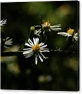 Aster's Branch Canvas Print