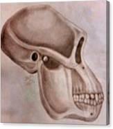 Astralopithecus Afarensis Cranium Canvas Print