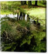 At The Edge Of The Forest Pond. Canvas Print