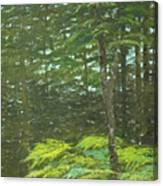 At The Forest's Edge Canvas Print