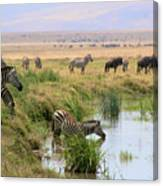 At The Watering Hole Canvas Print