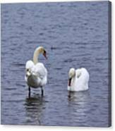 At Your Service. Mute Swan Canvas Print