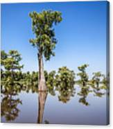 Atchafalaya Cypress Tree Canvas Print