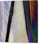 Atlantic Duck Canvas Print