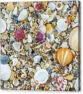 Atlantic' Shells Color Canvas Print