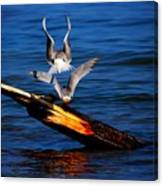 Atop A Tern Canvas Print