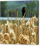 Atop The Cattails Canvas Print