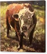 Atsa Lotta Bull Canvas Print