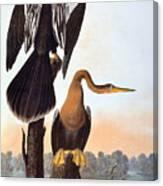 Audubon: Anhinga Canvas Print