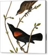 Audubon: Blackbird Canvas Print