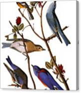 Audubon: Bluebirds Canvas Print