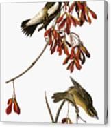 Audubon: Bobolink Canvas Print