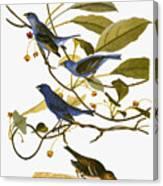 Audubon: Bunting, 1827-38 Canvas Print