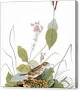 Audubon: Bunting Canvas Print