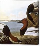 Audubon: Canvasback, 1827 Canvas Print