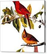 Audubon: Cardinal Canvas Print
