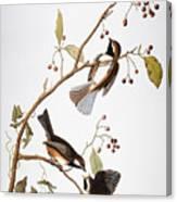 Audubon: Chickadee, (1827-1838) Canvas Print