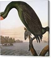 Audubon: Cormorant Canvas Print