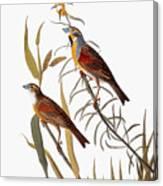 Audubon: Dickcissel Canvas Print
