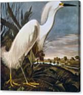 Audubon: Egret Canvas Print