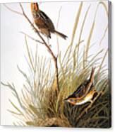 Audubon: Finch Canvas Print