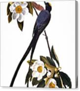 Audubon Flycatcher, 1827 Canvas Print