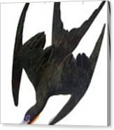 Audubon: Frigatebird Canvas Print