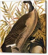Audubon: Goose Canvas Print