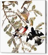 Audubon: Grosbeak Canvas Print