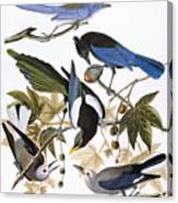Audubon: Jay And Magpie Canvas Print