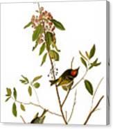 Audubon: Kinglet, 1827 Canvas Print