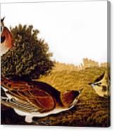 Audubon Lark Canvas Print
