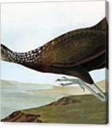 Audubon: Limpkin Canvas Print