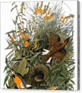 Audubon: Meadowlark Canvas Print