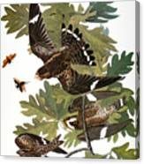 Audubon: Nighthawk Canvas Print