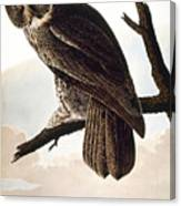Audubon Owl Canvas Print