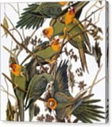 Audubon: Parakeet Canvas Print