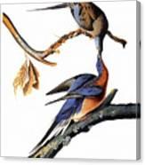 Audubon: Passenger Pigeon Canvas Print