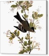 Audubon: Pewee, 1827-38 Canvas Print