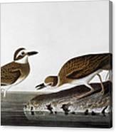 Audubon: Plover, 1827-38 Canvas Print