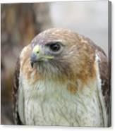 Audubon Quality Canvas Print