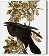 Audubon: Raven Canvas Print