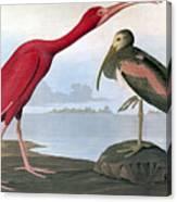 Audubon: Scarlet Ibis Canvas Print