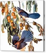 Audubon: Scrub Jay, 1827-38 Canvas Print
